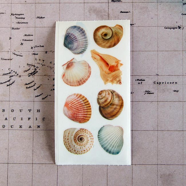 Sea Shell Sticker Sheet